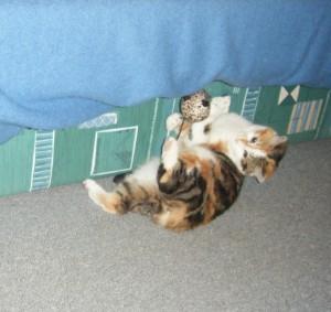 caramelle chat jeu jouet camon