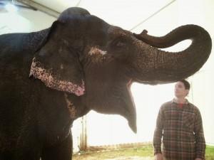 elephant cirque gruss center parcs
