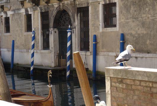 Venise mouette canal
