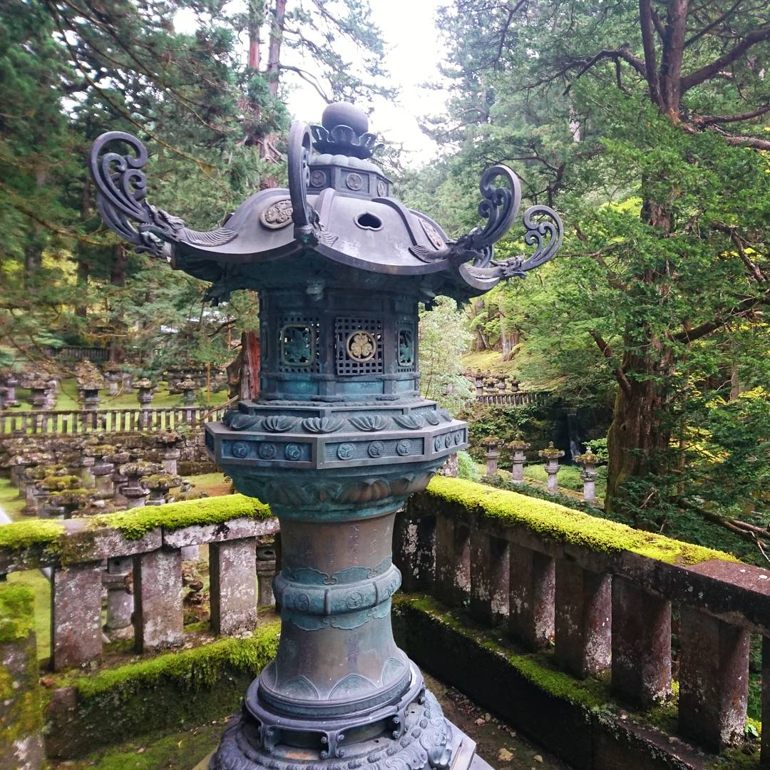 temple nikko mousse
